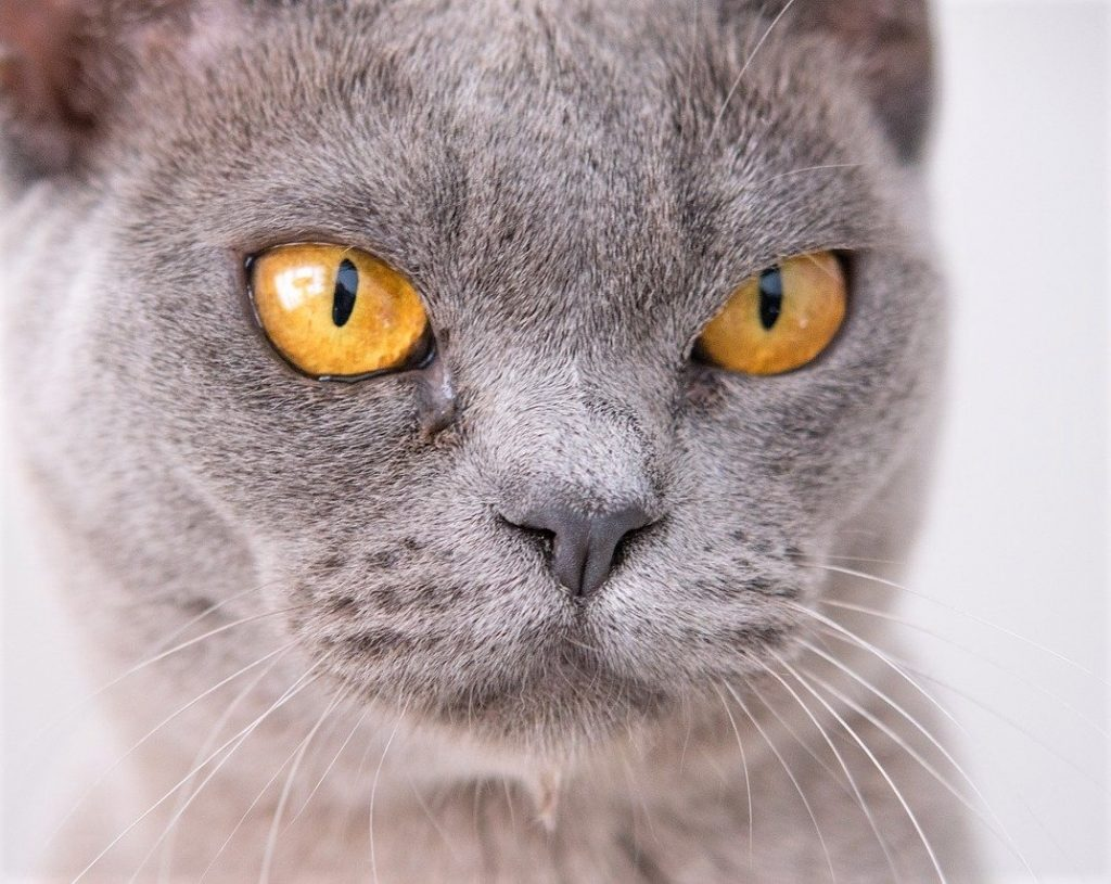 závist kočka
