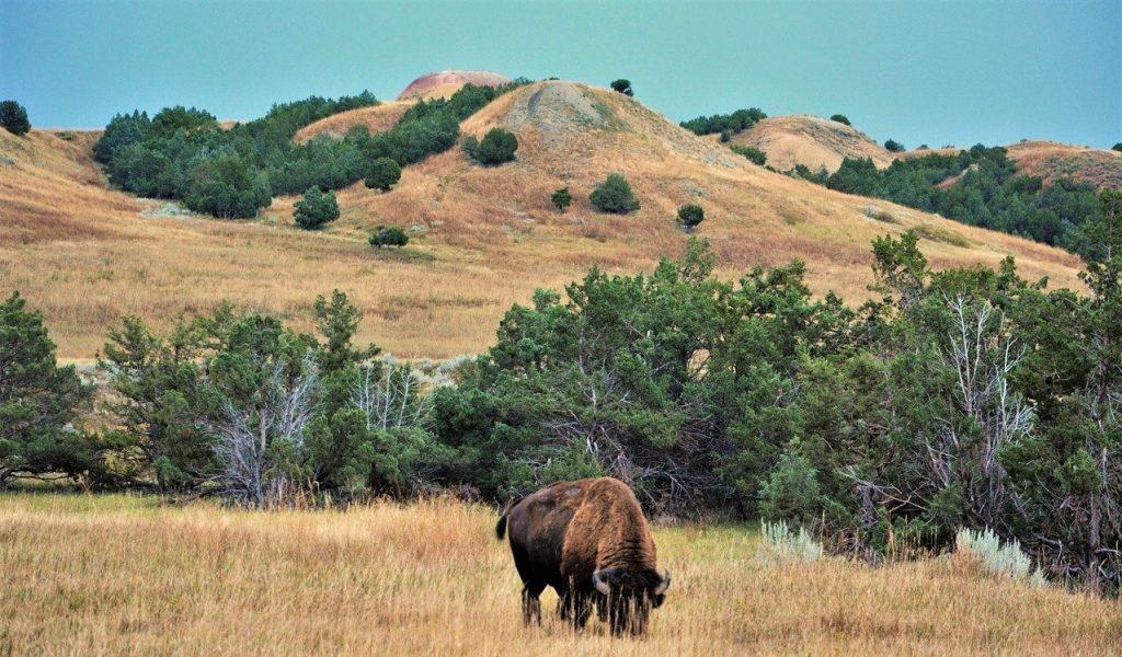 život za oceánem amerika pláně bizon oklahoma